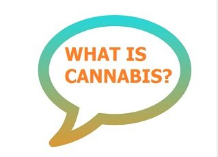 speechbubblewhatiscannabis-resize
